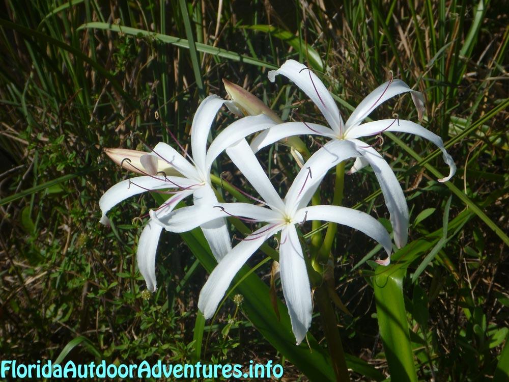 floridaoutdooradventures.info-15.jpg