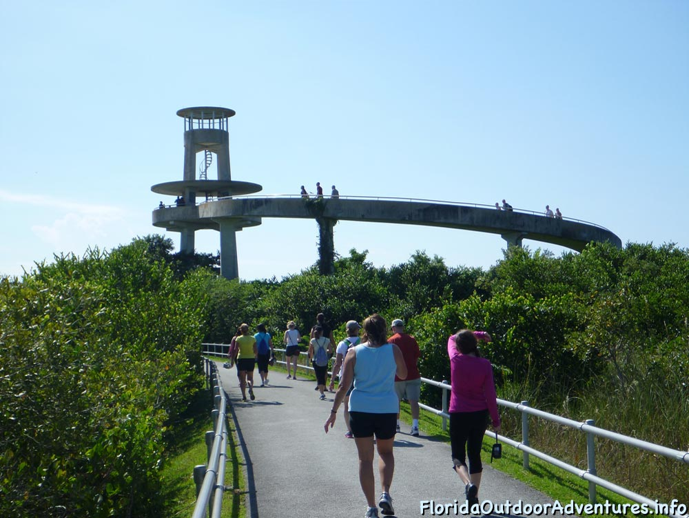 shark-valley-full-loop-floridaoutdooradventures.info-09.jpg